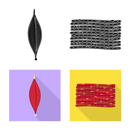 Isolated object of fiber and muscular icon. Collection of fiber and body  vector icon for stock.