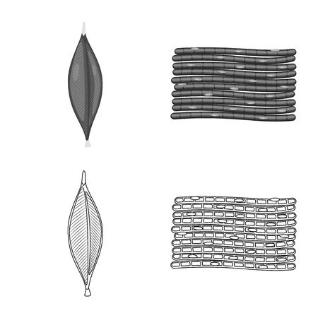 Vector illustration of fiber and muscular symbol. Collection of fiber and body  stock symbol for web.