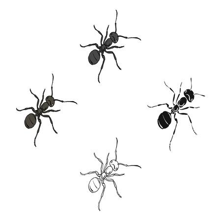 El insecto himenóptero es una hormiga. Solo icono de la hormiga animal artrópoda en la web isométrica del ejemplo de la acción del símbolo del vector del estilo de la historieta.