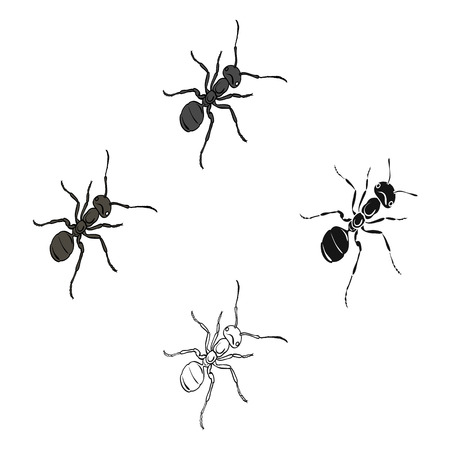 The hymenopteran insect is an ant.Arthropod animal ant single icon in cartoon,black style vector symbol stock isometric illustration web.