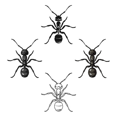 Ant icon in cartoon,black style isolated on white background. Insects symbol stock vector illustration.