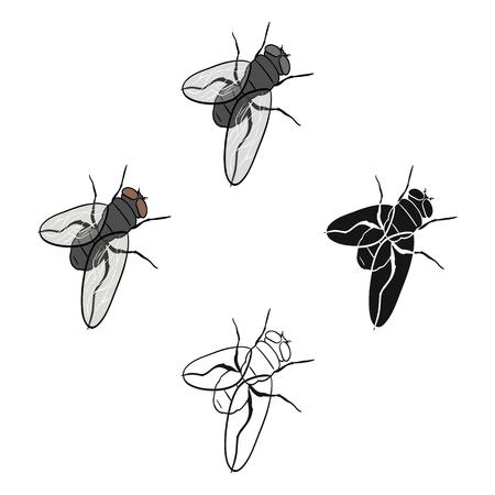 Dipterous insect fly.Dipterous insect fly single icon in cartoon,black style vector symbol stock isometric illustration web. Çizim