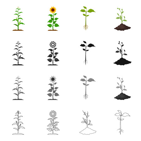 Vector design of plant and bean icon. Set of plant and process stock vector illustration. Stock Illustratie