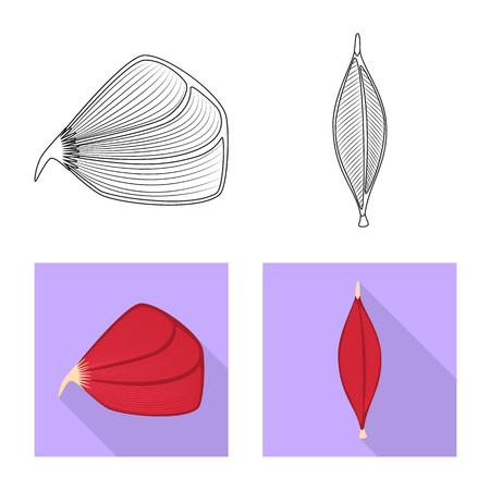 Vector illustration of fiber and muscular symbol. Collection of fiber and body  stock vector illustration.