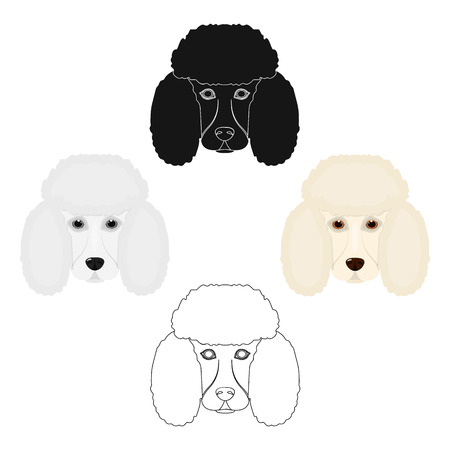 The dog breed is poodle.Muzzle of the poodle single icon in cartoon,black style vector symbol stock illustration web.