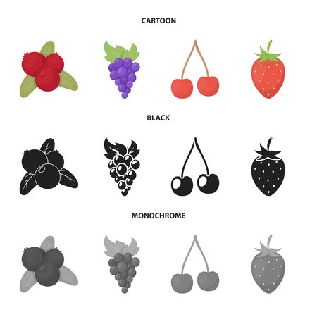 Vector illustration of berry and fruit. Collection of berry and redberry  stock vector illustration.