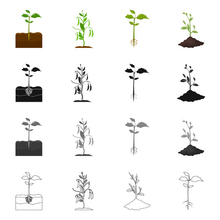 Isolated object of plant and bean icon. Set of plant and process stock symbol for web.