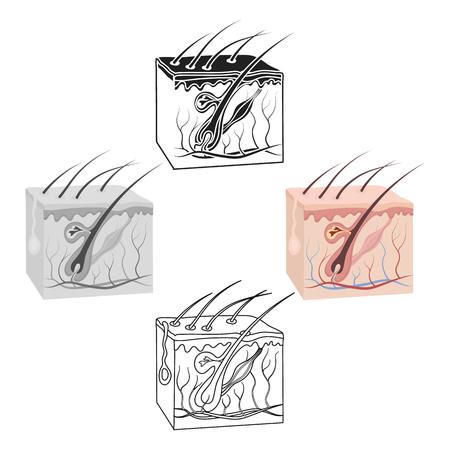 Skin icon in cartoon,black style isolated on white background. Organs symbol vector illustration. Illustration