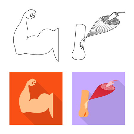 Vector design of fiber and muscular. Set of fiber and body  vector icon for stock. Illustration