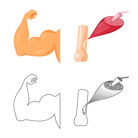 Vector design of fiber and muscular icon. Collection of fiber and body  stock vector illustration. Illustration