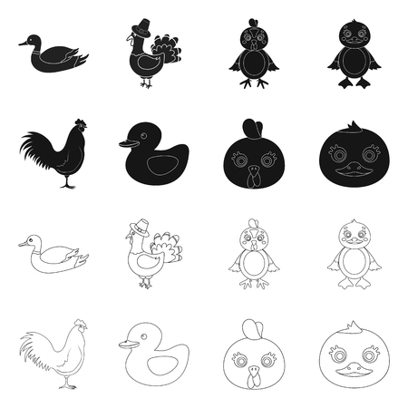 Vector illustration of funny and poultry logo. Collection of funny and farming stock symbol for web.