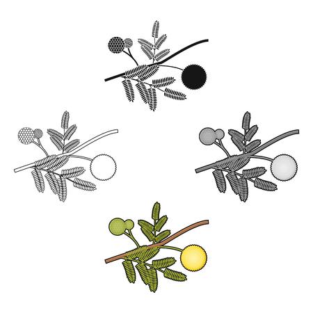 Yellow mimosa flower icon in cartoon,black style isolated on white background. Australia symbol stock vector illustration.