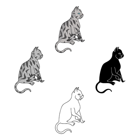 American Shorthair icon in cartoon,black style isolated on white background. Cat breeds symbol stock vector illustration. Ilustração