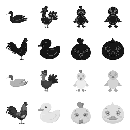 Isolated object of funny and poultry symbol. Collection of funny and farming vector icon for stock.