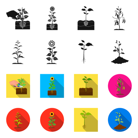 Isolated object of plant and bean symbol. Set of plant and process stock vector illustration. Illustration