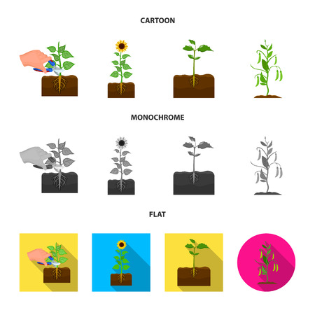 Vector illustration of plant and bean icon. Collection of plant and process stock symbol for web. Illustration