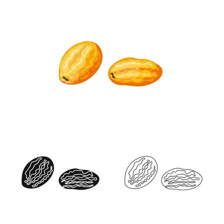 Vector design of kumquat  and citrus  icon. Collection of kumquat  and crop stock vector illustration. Illustration