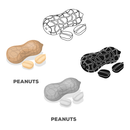 Peanut in the shell. Different kinds of nuts single icon in cartoon,black style vector symbol stock illustration.