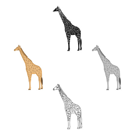 Giraffe is the highest land animal. A wild animal, a giraffe single icon in cartoon,black style vector symbol stock illustration web. 向量圖像