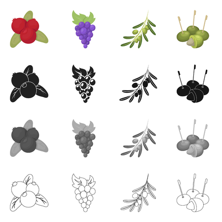 Isolated object of berry and fruit symbol. Set of berry and redberry  vector icon for stock.