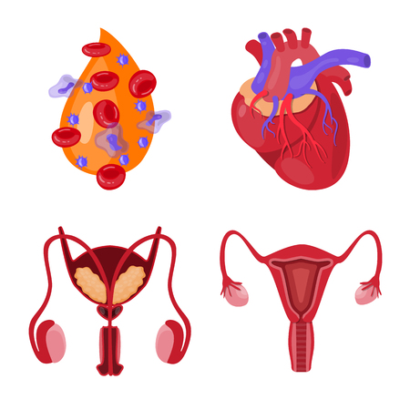 Isolated object of anatomy and organ icon. Collection of anatomy and medical stock vector illustration.
