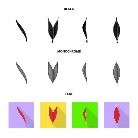 Vector design of fiber and muscular icon. Set of fiber and body  stock symbol for web. Illusztráció
