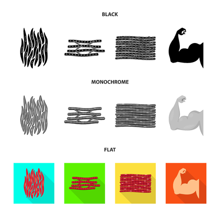Vector illustration of fiber and muscular icon. Set of fiber and body  vector icon for stock.