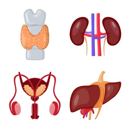 Vector illustration of anatomy and organ icon. Collection of anatomy and medical stock vector illustration. Illustration