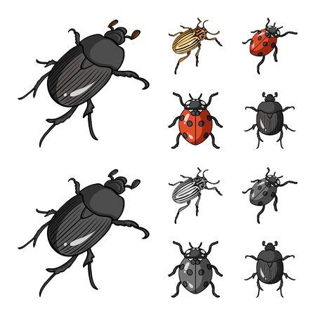 Isolated object of insect and beetle symbol. Set of insect and halloween stock vector illustration.