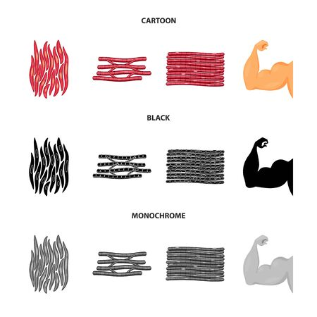 Vector design of fiber and muscular logo. Collection of fiber and body  stock vector illustration.
