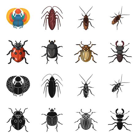 Isolated object of insect and beetle icon. Set of insect and halloween vector icon for stock.