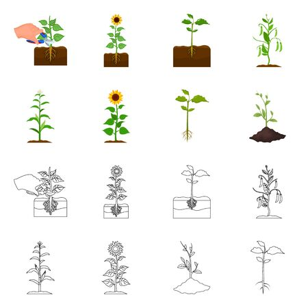 Isolated object of plant and bean logo. Collection of plant and process stock symbol for web.