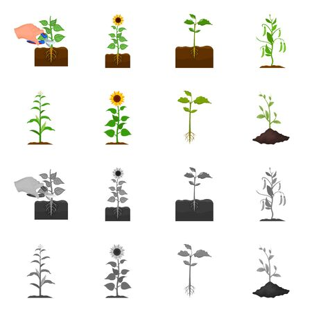 Isolated object of plant and bean icon. Collection of plant and process stock vector illustration.