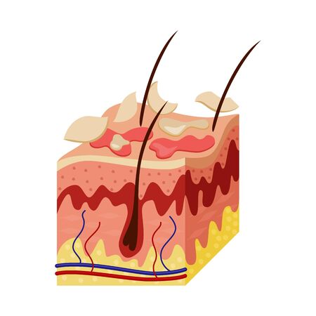 Isolated object of skin and epidermis  icon. Collection of skin and tissue vector icon for stock.