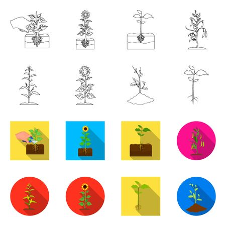 Vector design of plant and bean logo. Collection of plant and process vector icon for stock. Illustration