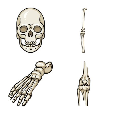 Vector illustration of bone and skeleton icon. Collection of bone and human vector icon for stock. Illustration