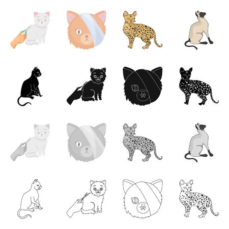 Vector design of pet and sphynx icon. Set of pet and fun stock vector illustration. Ilustração