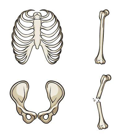 Vector illustration of bone and skeleton logo. Set of bone and human stock vector illustration.