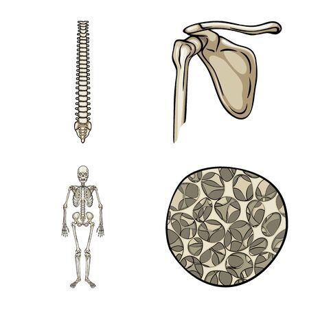 Vector illustration of bone and skeleton symbol. Set of bone and human stock vector illustration. Illustration