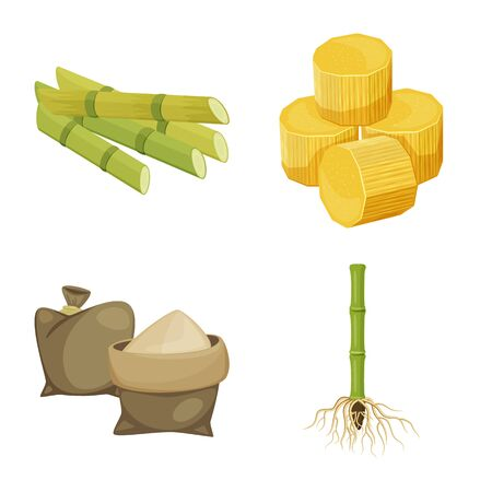 Vector illustration of sugarcane and cane icon. Set of sugarcane and field stock symbol for web.