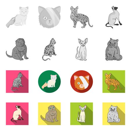 Isolated object of pet and sphynx symbol. Set of pet and fun vector icon for stock.