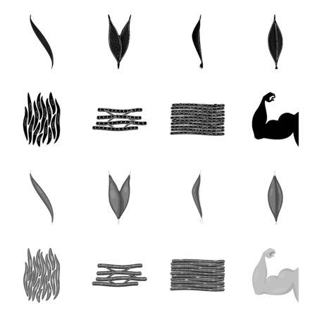 Vector illustration of fiber and muscular logo. Collection of fiber and body vector icon for stock.