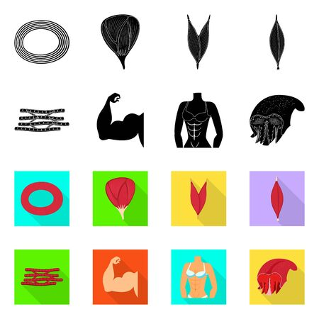 Vector illustration of fiber and muscular icon. Set of fiber and body stock vector illustration.