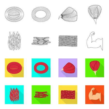Vector illustration of fiber and muscular. Collection of fiber and body vector icon for stock.