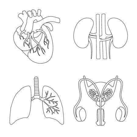 Vector illustration of anatomy and organ icon. Set of anatomy and medical vector icon for stock. Ilustración de vector