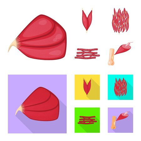 Vector illustration of fiber and muscular sign. Collection of fiber and body stock vector illustration.