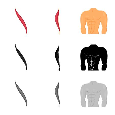 Vector design of fiber and muscular . Set of fiber and body stock symbol for web.