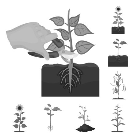 Isolated object of plant and bean sign. Collection of plant and process bitmap icon for stock. Stockfoto - 126733246