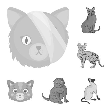 bitmap design of pet and sphynx. Collection of pet and fun stock symbol for web. Imagens