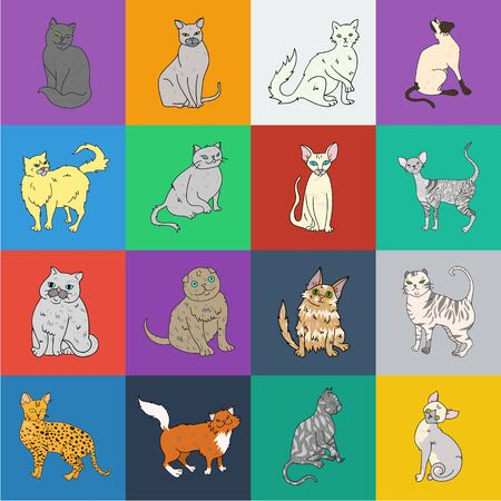 Breeds of cats cartoon icons in set collection for design. Pet cat bitmap symbol stock web illustration.